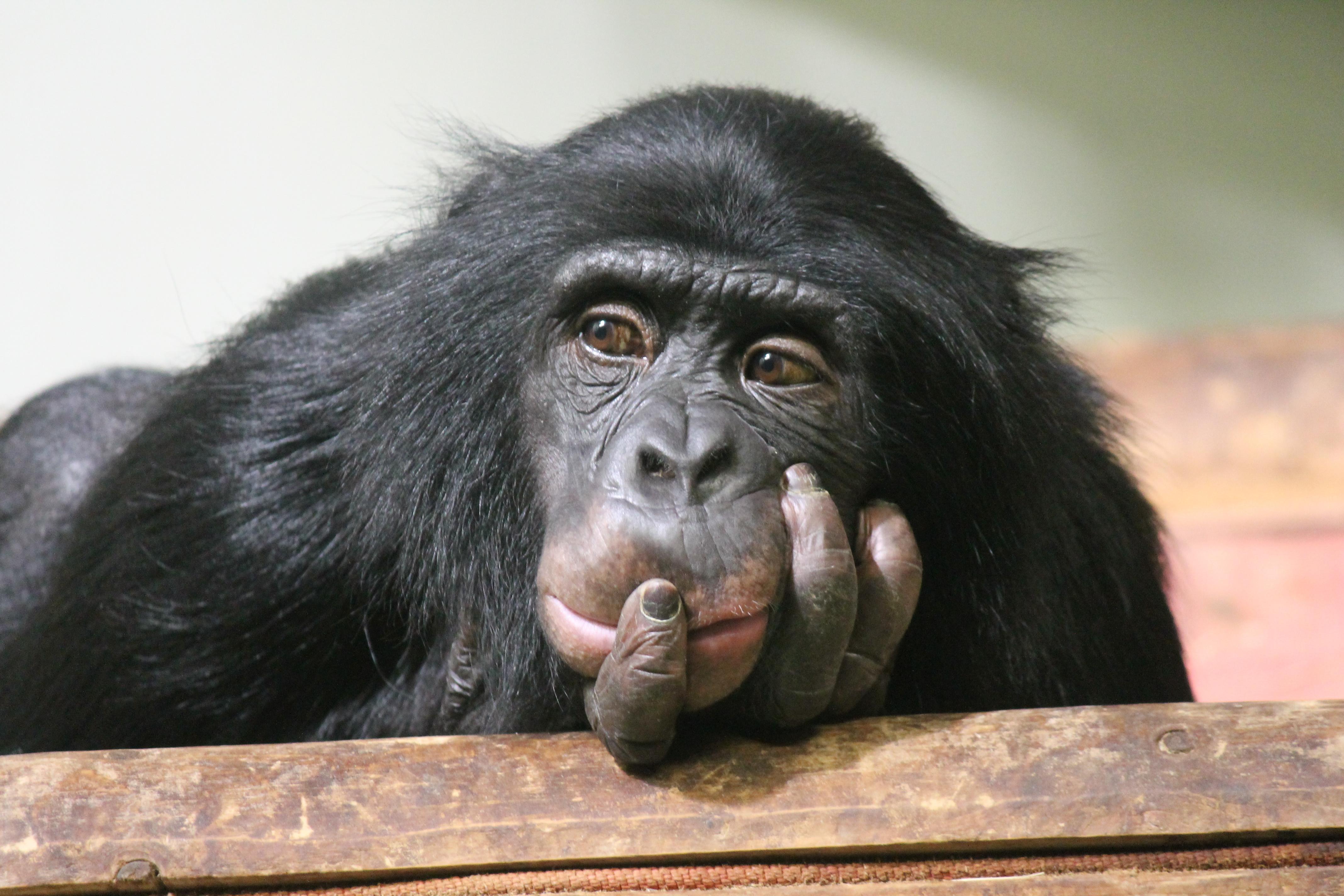 あなたの商品を買うのは「チンパンジー」